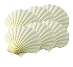 HIC Harold Import Co. 45679 Maine Man Baking Shells, 3.25 Inch, Set of 6, Natural Seashell
